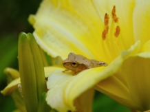 Rob paine frog in flower