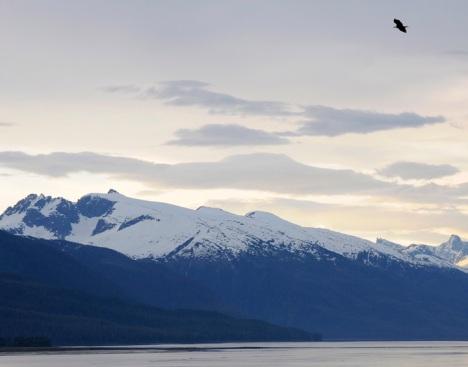 Bald Eagle over Alaska
