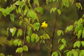 goldfinch rob paine