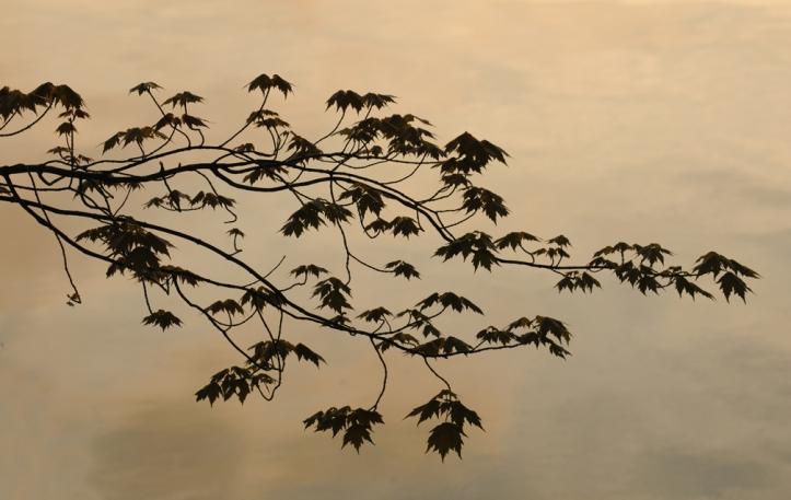 web leaves on water
