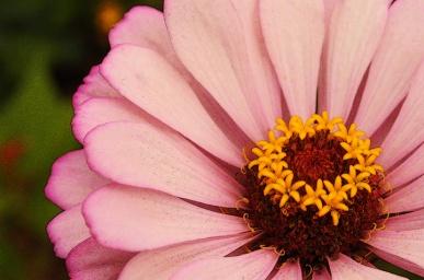 Rob Paine Flower