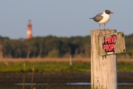 web bird on pole
