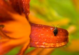 web bug on flower