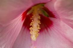 web cone flower