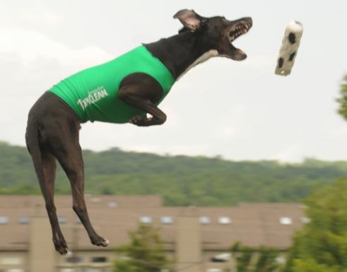 web dock dogs a