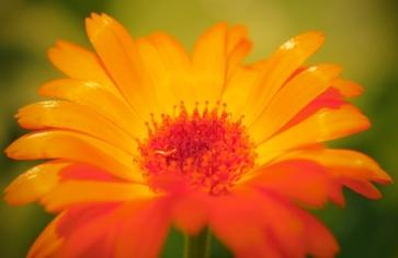 flower rob paine