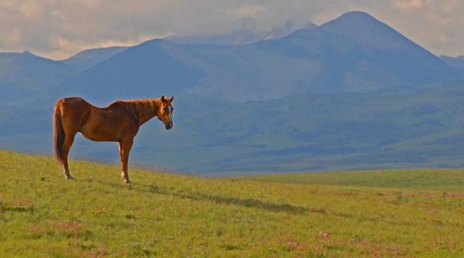 rob paine montana horse