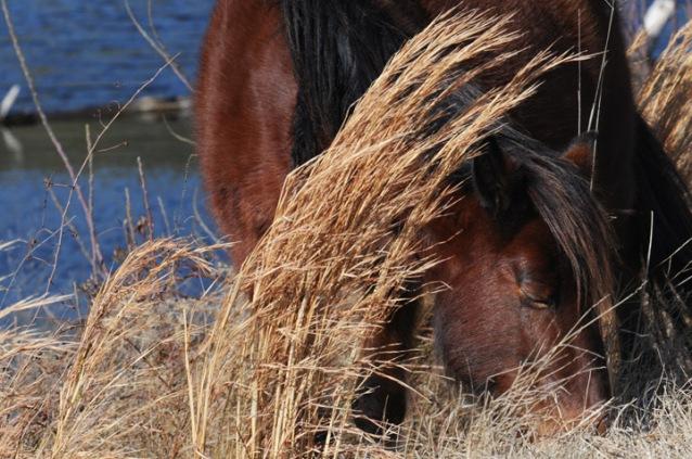 web pony grazes