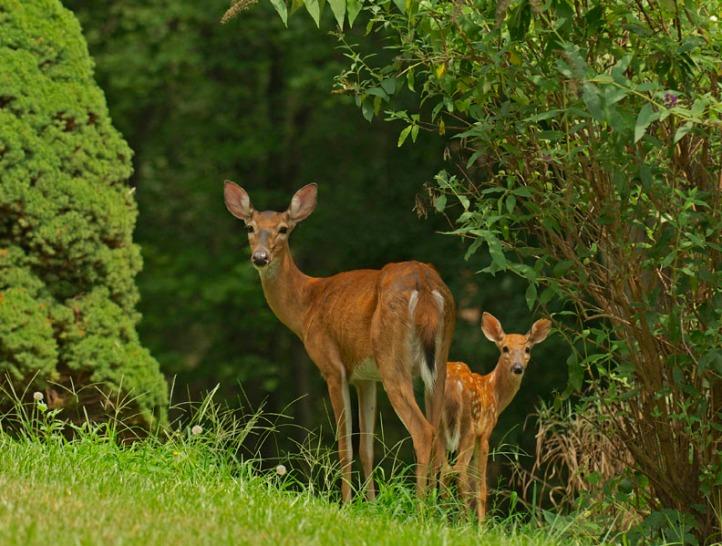 web rob paine deer