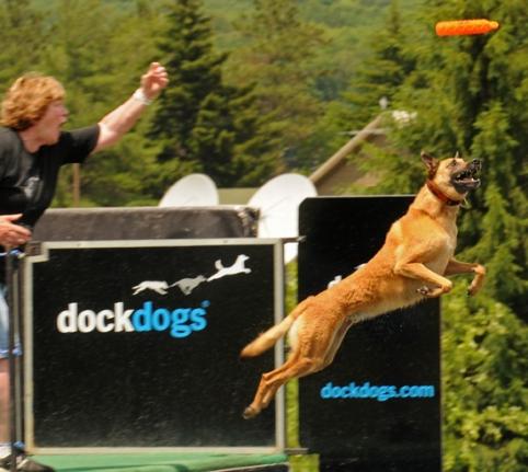paine dockdogs