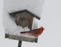 rob paine cardinal in snow