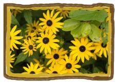 Rob Paine Flowers