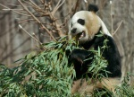rob paine panda