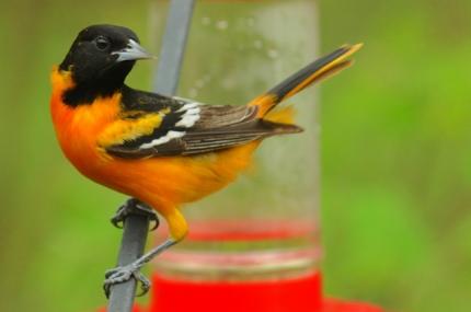 rob paine bird photography