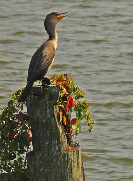 web bird on pier