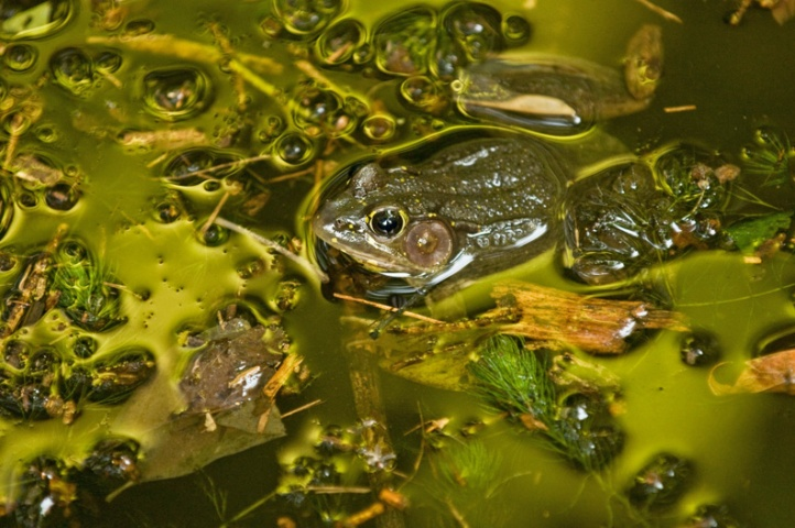Rob Paine Arlington Frog