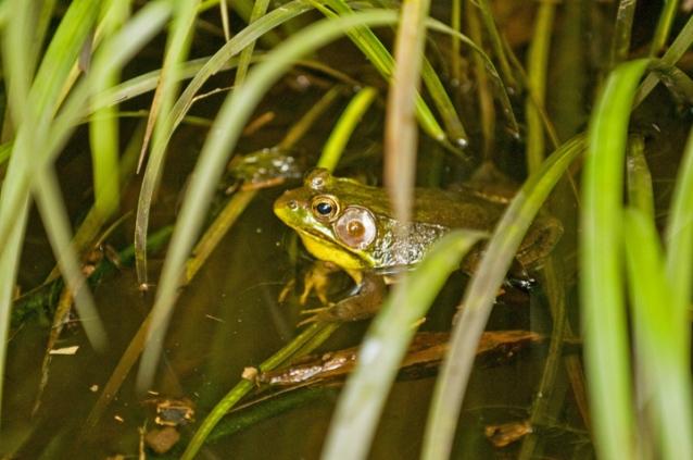 frog eye Rob Paine Arlington