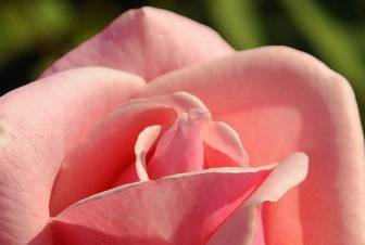 Rob Paine Lee House Rose