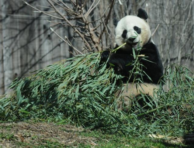 web panda rob paine one