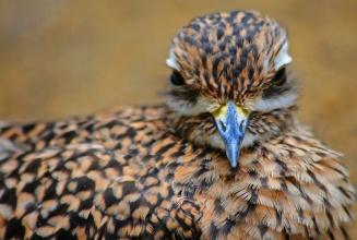 Rob Paine PIttsburgh Bird