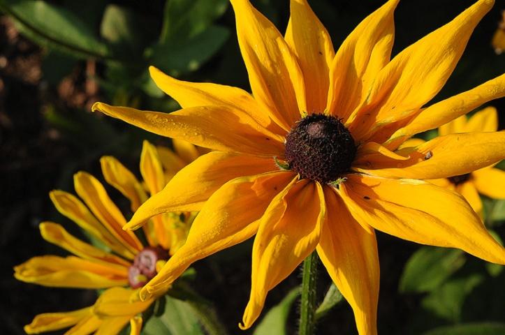 Memorial Sunflower Rob Paine
