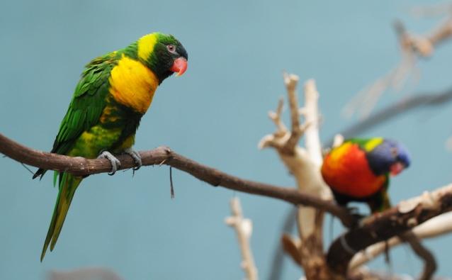 web colorful birds