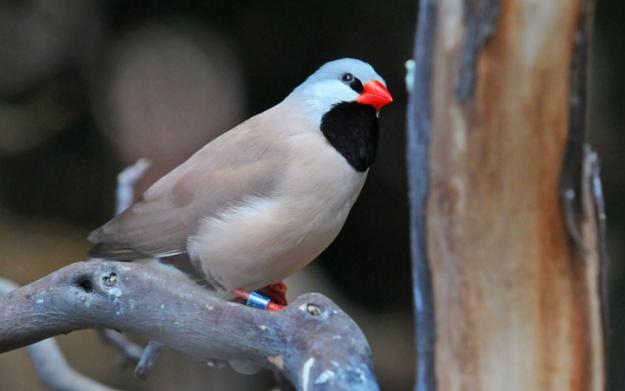 Paine Web bird