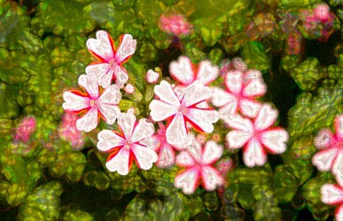 Rob Paine Starlight flowers