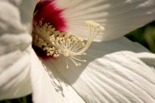 Rob Paine WVA Botanic Garden