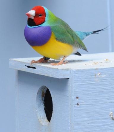 Rob Paine Bird National Aviary