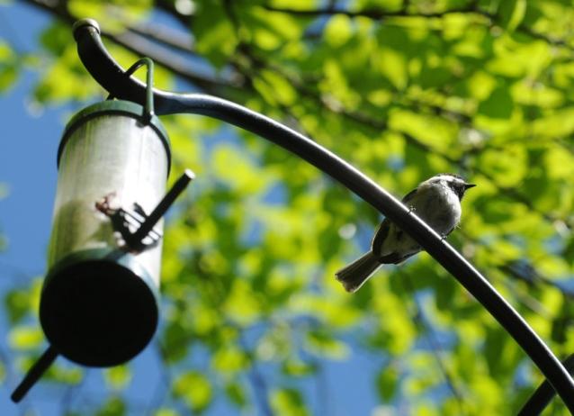 cropped dweb bird from below