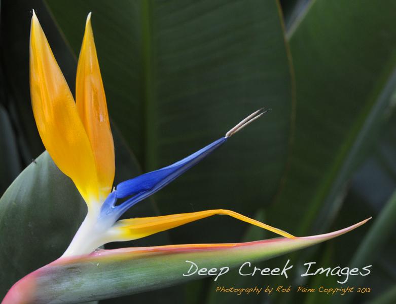 web blue and yellowflower