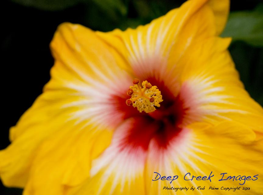 web flower rob paine