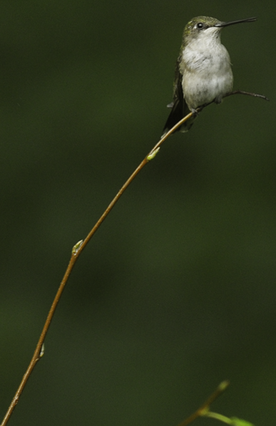 web hummer