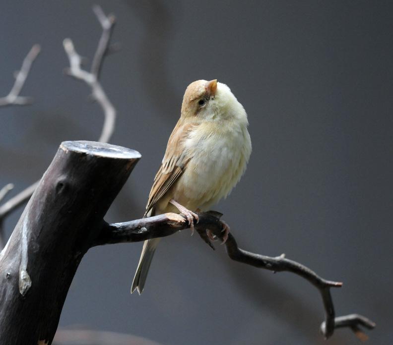 web rob paine nat aviary