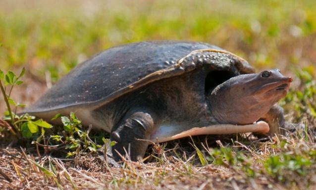 web turtle