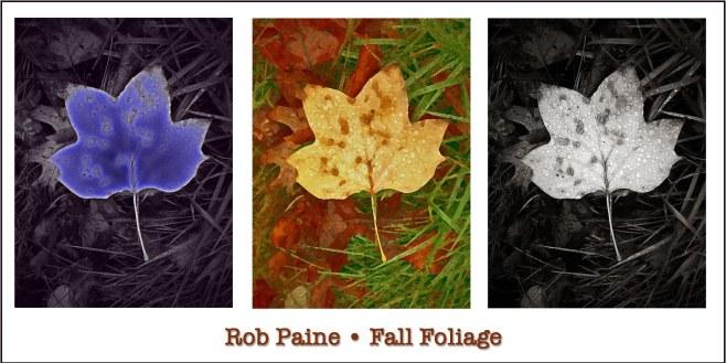 Painted Leaves Rob Paine
