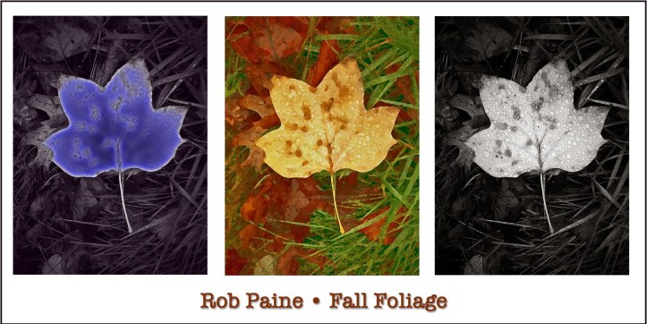 Painted Leaves Rob Paine