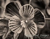 rob paine black and white flower