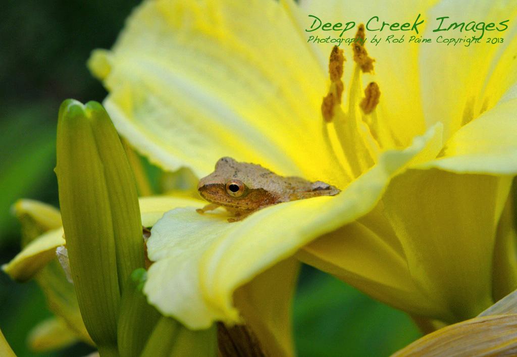 rob paine flower surprise deep creek lake