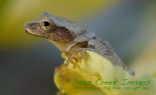 rob paine frog in flower web