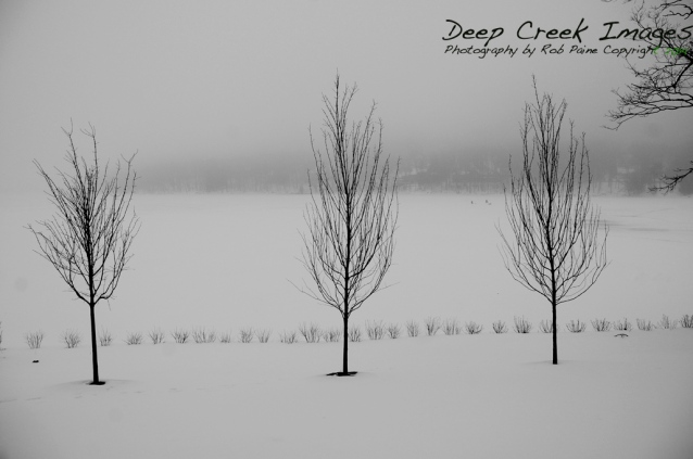 three trees dcl b and w