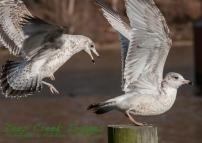 web birds occ rob paine two