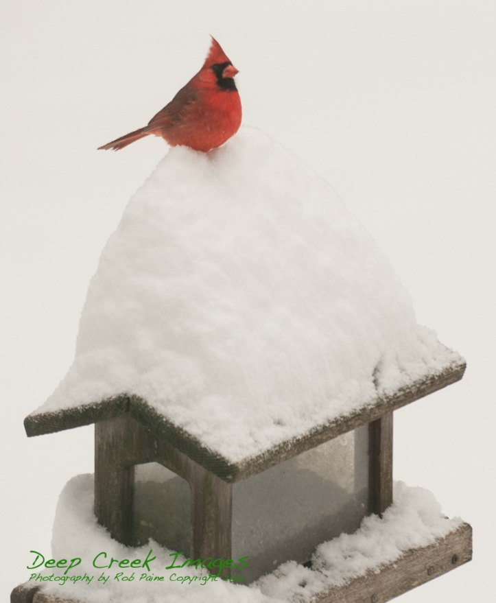 rob paine pax cardinal