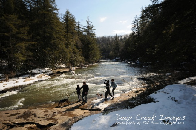 dog walk on river rob paine