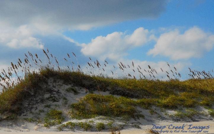 rob paine dunes