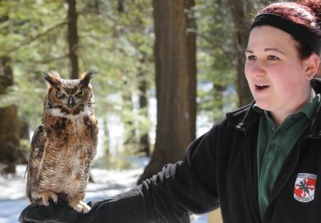 rob paine owl parks