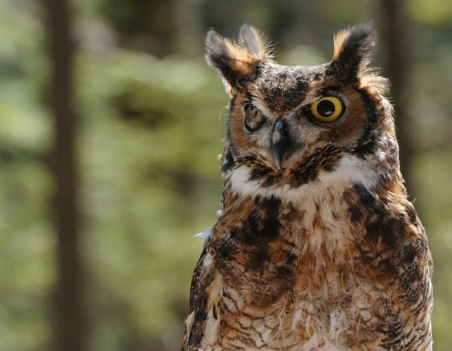 rob paine owl