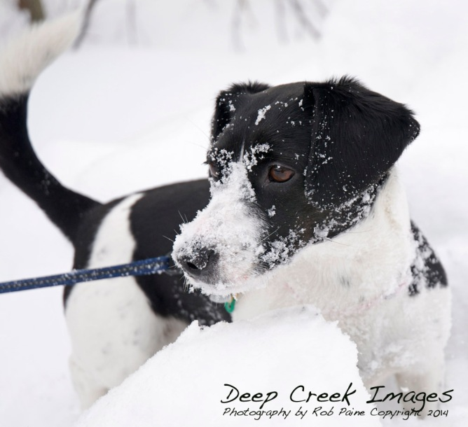 rob paine snow dog