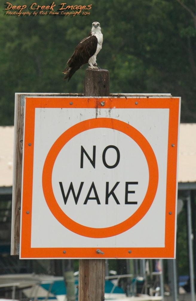 big bird bigger sign